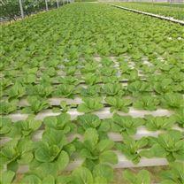 温室无土栽培水培设施